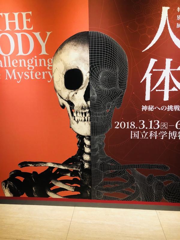 上野国立科学博物館  特別展 人体 神秘への挑戦